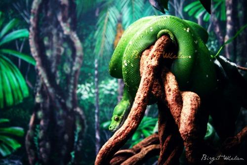 Serpent IV ~ By Birgit Whelan