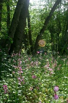 Summer Meadow in Surrey