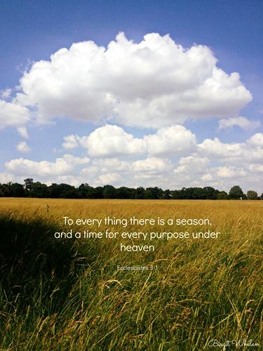 Ecclesiastes 31 by Birgit Whelan
